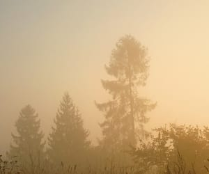 forest, mist, and sunrise image