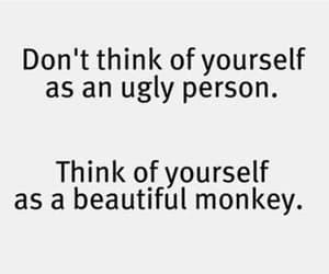 monkey, beautiful, and funny image