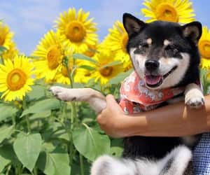 flowers, puppy, and husky image