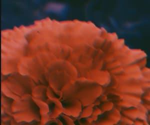 lyric, orange, and fondo image