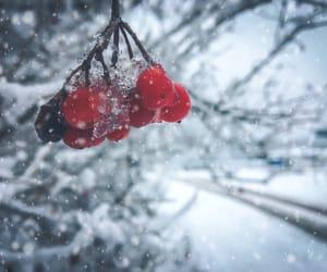 fruit, FRUiTS, and śnieg image