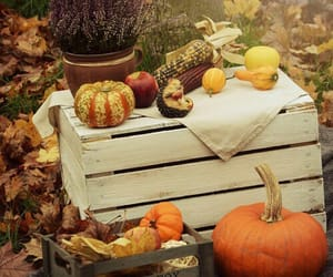 autumn, pumpkin, and leaves image