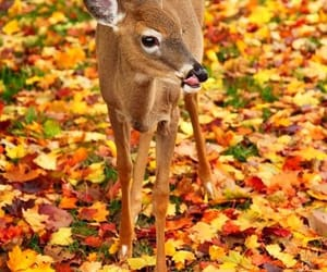 animal, autumn, and deer image