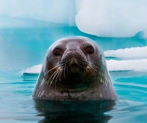 antarctica, wanderlust, and ice image