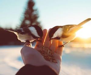 animal and birds image