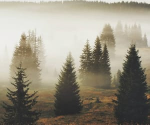 fog, forest, and photography image