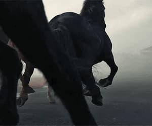 animals, gif, and arabian horse image