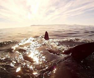 animals, shark, and nature image