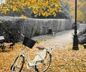 autumn, fall, and bicycle image