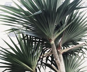 green, palm, and plant image