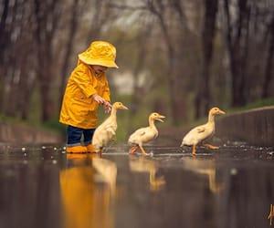 duck, rain, and cute image