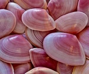 pink, shell, and beach image