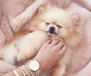 dog, fluff, and pink image