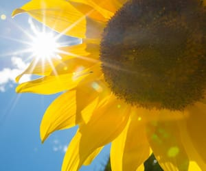 italy, vacation, and sunflower image