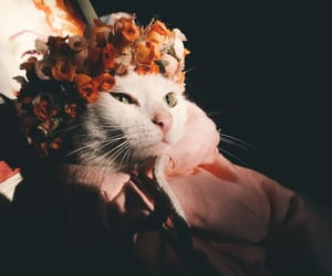 cat, flowers, and pet image