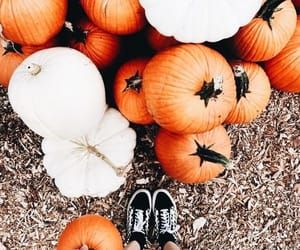 autumn, sneakers, and fall image