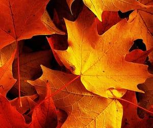 orange and autumn image