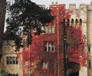 autumn, autumnal, and botanical image