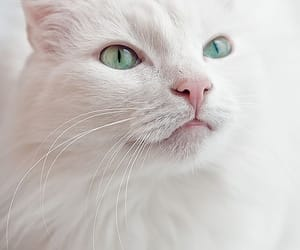 kitty, adorable, and beautiful image