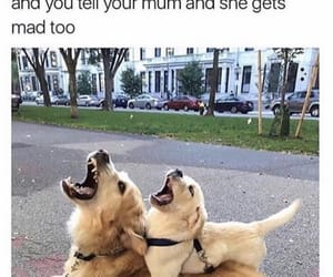 dogs, mom, and meme image