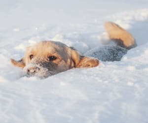 puppy, snow, and winter image