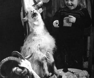 goat, black and white, and vintage image