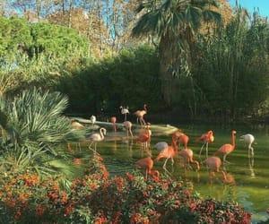 aesthetic, flamingo, and nature image