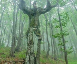 naturaleza, niebla, and verde image