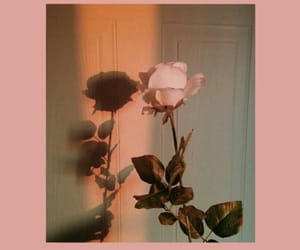 flower, inspo, and plants image
