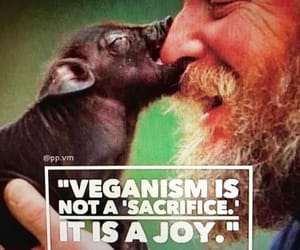 vegan and friends image