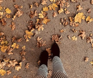 autumn, high heels, and leaves image
