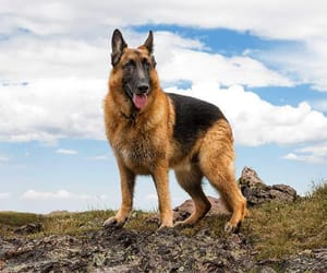 animals, nature, and dogs image