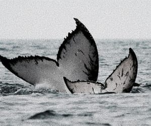 theme, whale, and ocean image