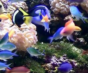 wallpaper, animado, and peces image