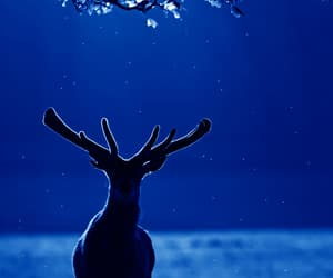 antlers, blue, and lockscreen image