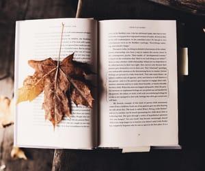 grafika book, autumn, and fall