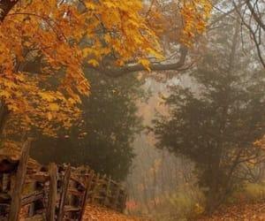 grafika autumn, nature, and fall