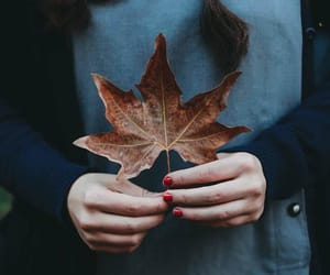 autumn, cozy, and photography image