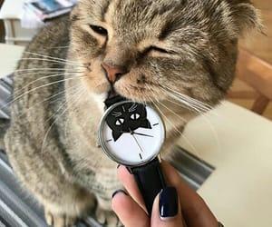 adorable, kitty, and pets image