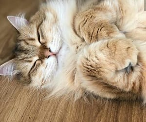adorable, beautiful, and cats image