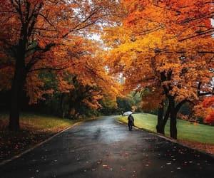 autumn, beautiful, and nature image