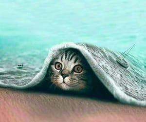 animals, sea, and cat image