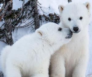 animal, bear, and winter image