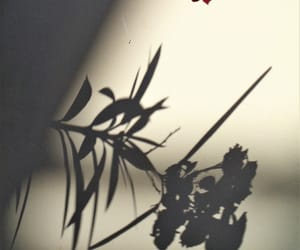 flower, Greece, and shadow image