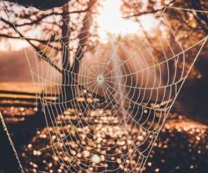 grafika autumn, Halloween, and nature