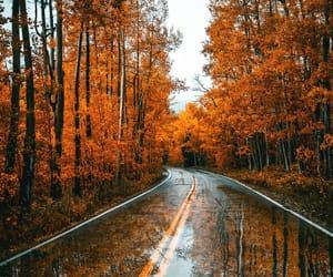 grafika autumn, fall, and orange