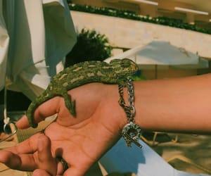 animals, camouflage, and chameleon image