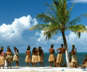 culture, palmtree, and tropical image
