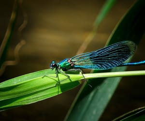 dragonfly nature river image