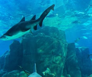 sharks and aquaurium image
